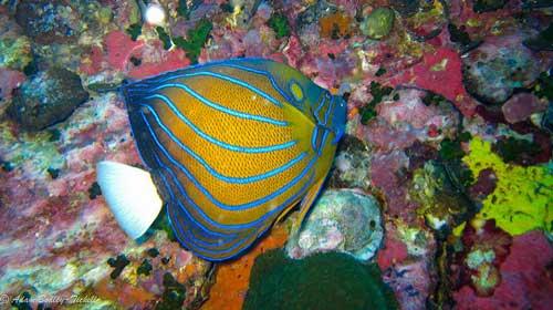 泰国潜水攻略指南:最佳时间、最佳地点